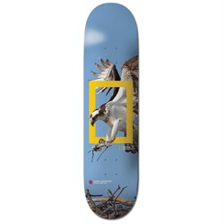 Element Nat Geo Team Osprey 8.2 Skateboard Deck